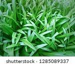 grass fresh green  | Shutterstock . vector #1285089337