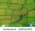 pictures of rice fields in ubud ... | Shutterstock . vector #1285161901