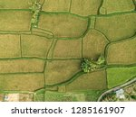 pictures of rice fields in ubud ... | Shutterstock . vector #1285161907