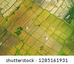 pictures of rice fields in ubud ... | Shutterstock . vector #1285161931