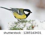 great tit sitting on snowy... | Shutterstock . vector #1285163431