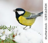 great tit sitting on snowy... | Shutterstock . vector #1285163434