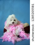 dog photo shoot. beautiful... | Shutterstock . vector #1285205581