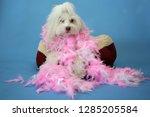 dog photo shoot. beautiful... | Shutterstock . vector #1285205584
