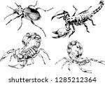 vector drawings sketches... | Shutterstock .eps vector #1285212364