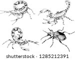 vector drawings sketches... | Shutterstock .eps vector #1285212391