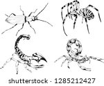vector drawings sketches... | Shutterstock .eps vector #1285212427