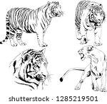 vector drawings sketches... | Shutterstock .eps vector #1285219501