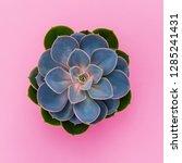Succulent Flower On Pink...