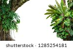 Small photo of Nature frame of jungle trees with tropical rainforest foliage plants (Monstera, bird's nest fern, golden pothos and forest orchid) growing in wild isolated on white background with clipping path.