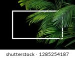 tropical palm leaves rainforest ... | Shutterstock . vector #1285254187