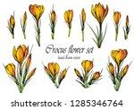 set of yellow orange crocus...   Shutterstock .eps vector #1285346764