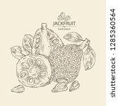 jackfruit  fruit and jackfruit... | Shutterstock .eps vector #1285360564