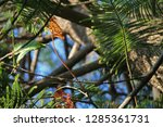 branches of an exotic southern...   Shutterstock . vector #1285361731