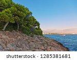 trees on coastal rocks at... | Shutterstock . vector #1285381681