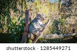 a close up photo of a beautiful ... | Shutterstock . vector #1285449271