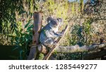 a close up photo of a beautiful ... | Shutterstock . vector #1285449277