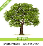 beautiful tree realistic  on a... | Shutterstock .eps vector #1285459954