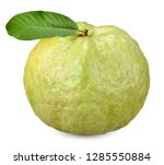 guava fruit isolated on white...   Shutterstock . vector #1285550884