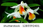 orchidseveral colors ...   Shutterstock . vector #1285592401