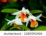 orchidseveral colors ...   Shutterstock . vector #1285592404