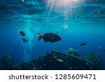 Underwater Ocean With Tropical...