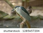 try birds while trying prey | Shutterstock . vector #1285657204