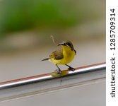 yellow bird on windows  | Shutterstock . vector #1285709314