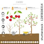 cherry beneficial features... | Shutterstock .eps vector #1285838314