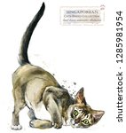 Stock photo singaporean cat watercolor home pet illustration cats breeds series domestic animal 1285981954
