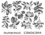 big set of botanical elements   ... | Shutterstock .eps vector #1286061844