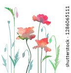poppy flowers in watercolor... | Shutterstock .eps vector #1286065111