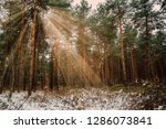 dreamy landscape with winter... | Shutterstock . vector #1286073841