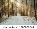 road in winter forest and... | Shutterstock . vector #1286073844