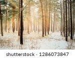 dreamy landscape with winter... | Shutterstock . vector #1286073847