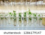 cloned gene modified micro... | Shutterstock . vector #1286179147