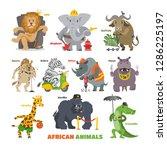 african animals vector cartoon... | Shutterstock .eps vector #1286225197