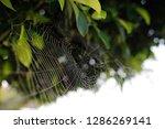 blurred images of spider webs...   Shutterstock . vector #1286269141