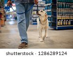 Stock photo man and dog on leash walking in hard ware store 1286289124