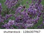 various flowers in different...   Shutterstock . vector #1286307967
