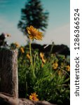 colorful flowers garden nature   Shutterstock . vector #1286366524