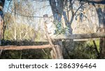 a close up photo of a beautiful ... | Shutterstock . vector #1286396464