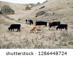 caucasian cattle breeding ... | Shutterstock . vector #1286448724