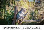 a close up photo of a beautiful ... | Shutterstock . vector #1286496211