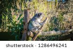 a close up photo of a beautiful ... | Shutterstock . vector #1286496241
