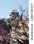 plum blossoms around osaka... | Shutterstock . vector #1286730337