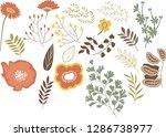 flower plant herbal leaf poppy... | Shutterstock .eps vector #1286738977