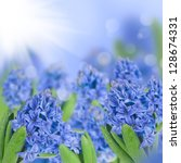 Blue Hyacinth With Bokeh...