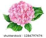 elegant pink hydrangea flower...   Shutterstock . vector #1286797474