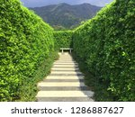 pathway in the garden with a... | Shutterstock . vector #1286887627